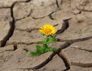 Yellow Flower Crack Pixabay